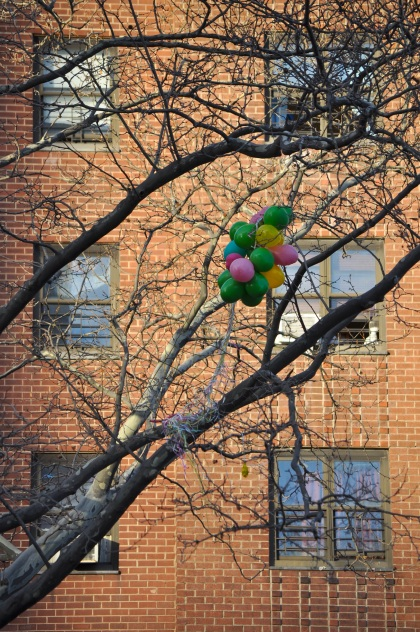 Balloons In A Tree - New York City, New York