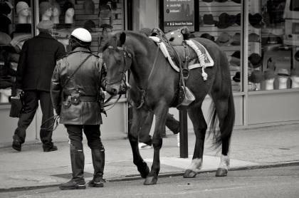 Newark Horse Cop - Newark, New Jersey