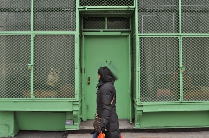 Window Owl - New York City, New York